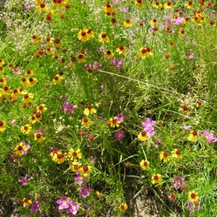 wildflowers atop enchanted rock
