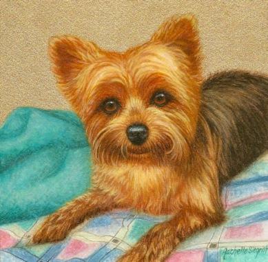 Yorkie painting - Benji - by Rachelle Siegrist.jpg