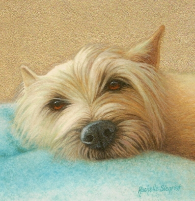 dog painting by rachelle siegrist commission a pet painting