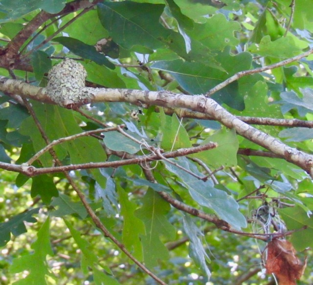 hummingbird nest photo by rachelle siegrist.jpg