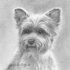 Yorkie drawing, Benji by Rachelle Siegrist