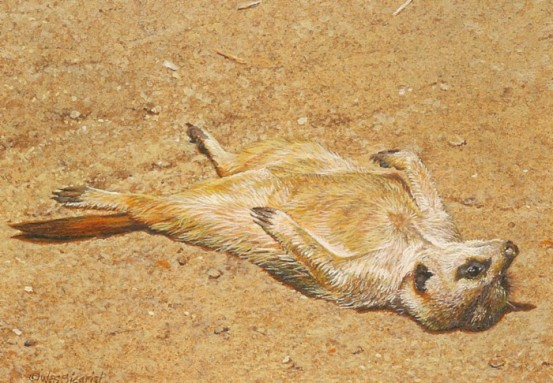 Meerkat painting, Life At Its Best by Wes Siegrist