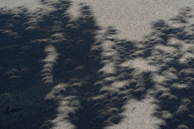 solar eclipse crescent shadows