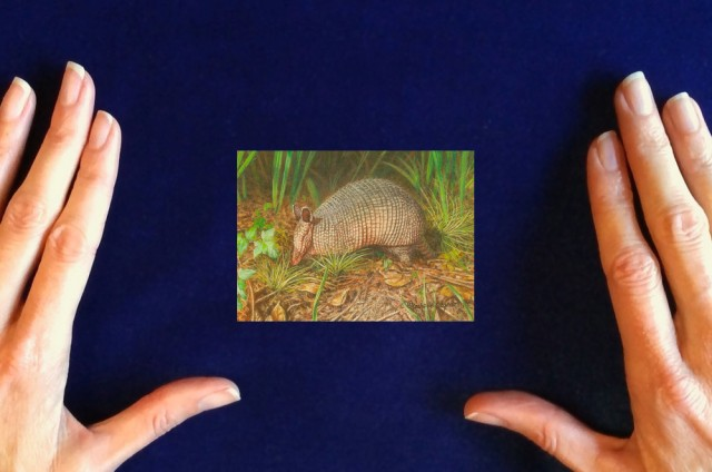 Armadillo-painting_Southern_Pest_Control-by-Rachelle-Siegrist1