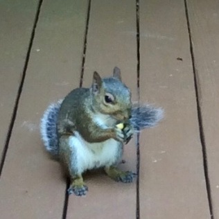 cute squirrel photo