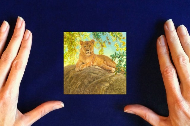 Lion_In_The_Shade_by_Rachelle_Siegrist1