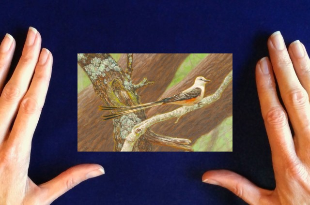 Scissor-tailed_Flycatcher_Painting_by_Wes_Siegrist1