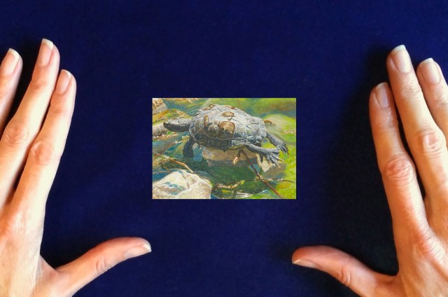 Turtle-painting_Waiting_For_High_Tide-by-Wes-Siegrist1