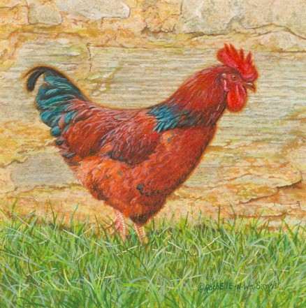 Rooster painting by Rachelle and Wes Siegrist, Mr. Red From Rhode Island
