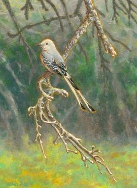 Scissortail-flycatcher painting Southwestern Splendor by Wes Siegrist