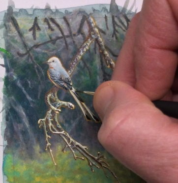 Wes Siegrist painting a Scissortailed Flycatcher