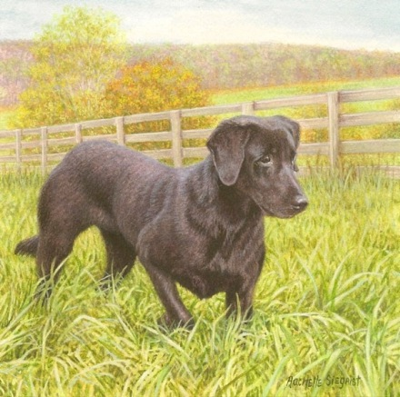 black lab dog painting commission a dog painting
