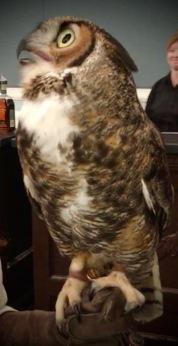 owl at SEWE