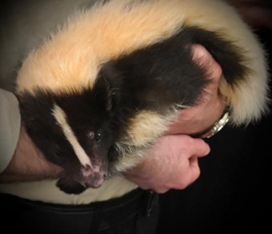 skunk at SEWE