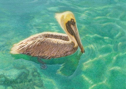 Wes & Rachelle Siegrist Miniature pelican Paintings