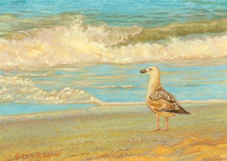 Wes & Rachelle Siegrist - Miniature seagull Paintings