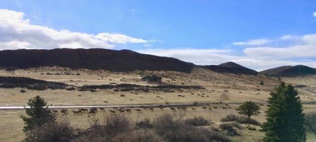 elk herd in colorado
