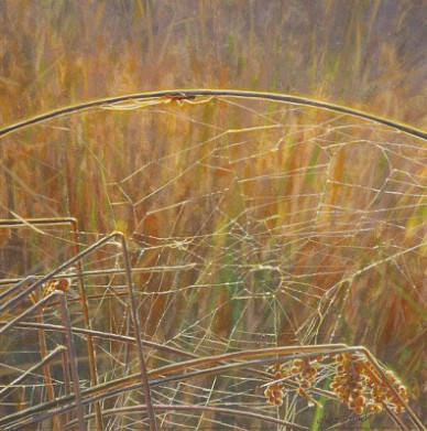 Long-jawed_Orb_Weavers-by-Wes_Siegrist