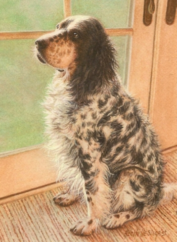 english setter dog painting by Rachelle Siegrist