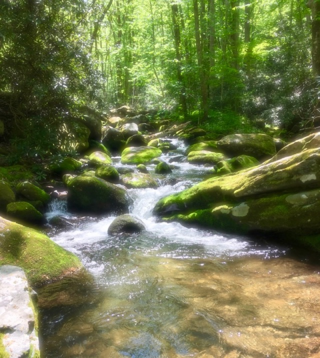 stream in roaring fork motor trail gatlinburg
