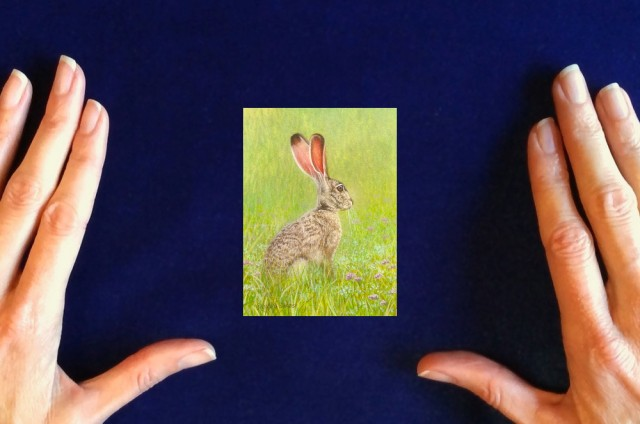 Black-tailed_Jack_Rabbit_painting_by_Rachelle_Siegrist1