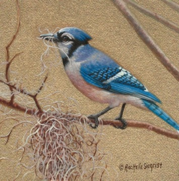Blue Jay painting by Rachelle Siegrist