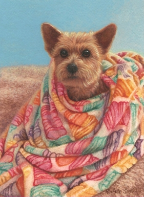 yorkie painting by Rachelle Siegrist