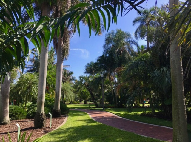 palm tree arboretum st. pete fl