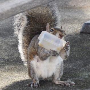rachelle siegrist cute squirrel photo