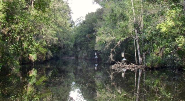 rachelle siegrist jungle boat ride photo at homasassa springs