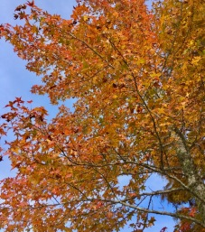 fall color in the smokies rachelle siegrist