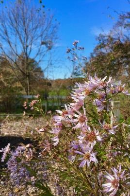 flowers at pickering creek audubon center