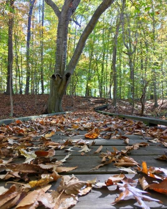 trails at pickering creek audubon center