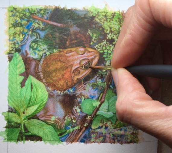 frog painting by rachelle siegrist