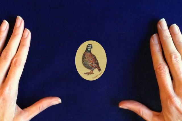portrait-of-a-bobwhite-quail_painting by_rachelle_siegrist1