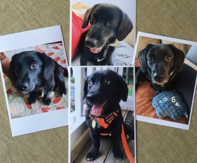 dog photos for dog commission