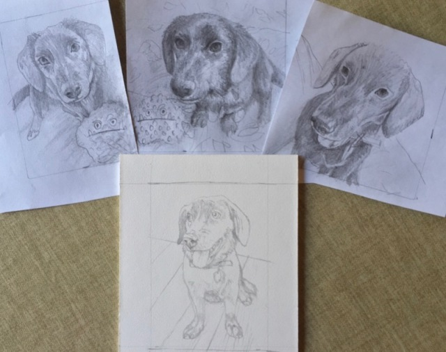 dog sketches for dog commission