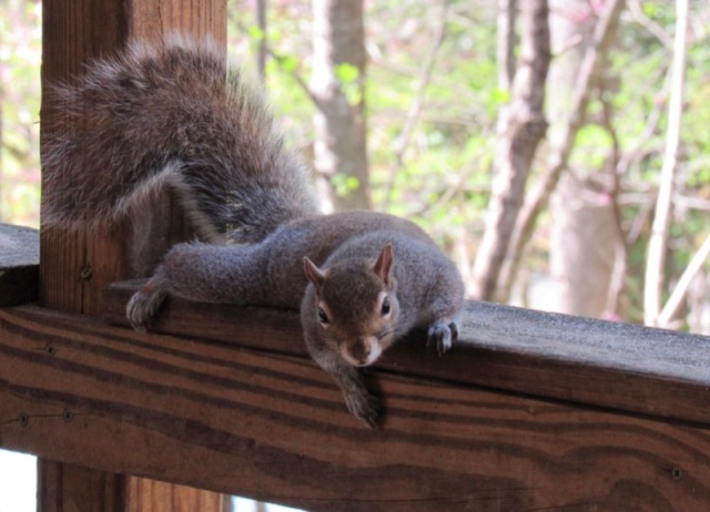 cute squirrel photo4