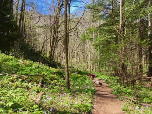 rachelle siegrist hiking the smokies