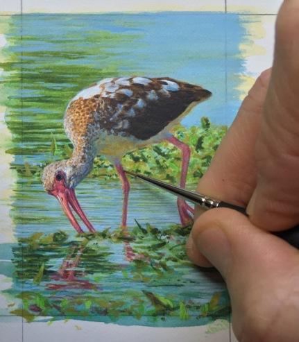 immature white ibis painting