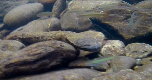 wes siegrist underwater photo1