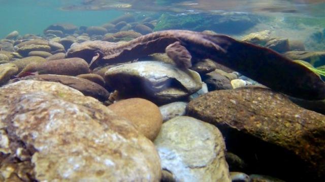 wes siegrist underwater photo5