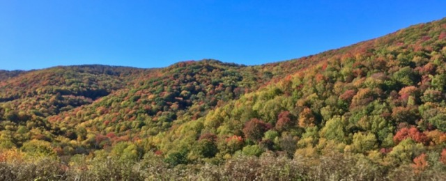 fall color in the smokies3