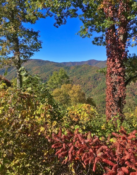 fall leaves in the smokies