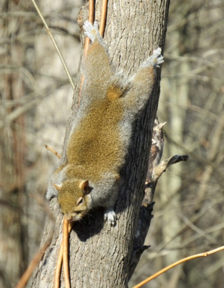 cute squirrel photo by rachelle siegrist