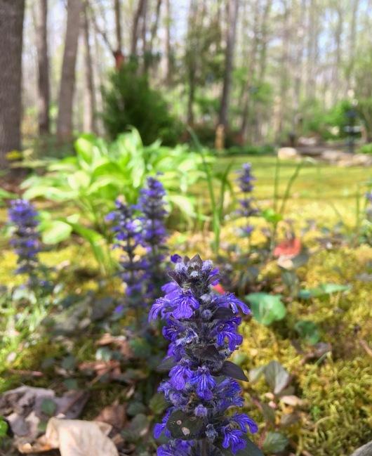 wildflowers of the smokies3