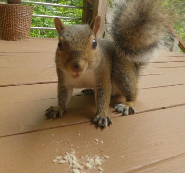 cute squirrel photo2