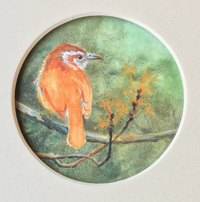 Carolina Wren miniature painting by Wes Siegrist