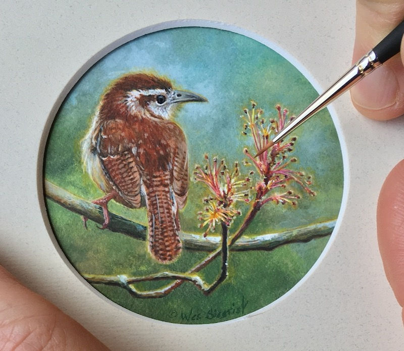 carolina wren painting by Wes Siegrist