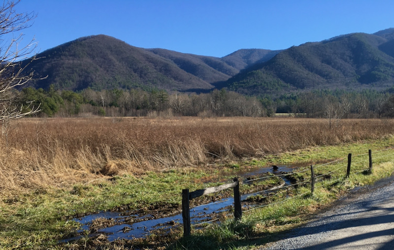 crow in cades cove